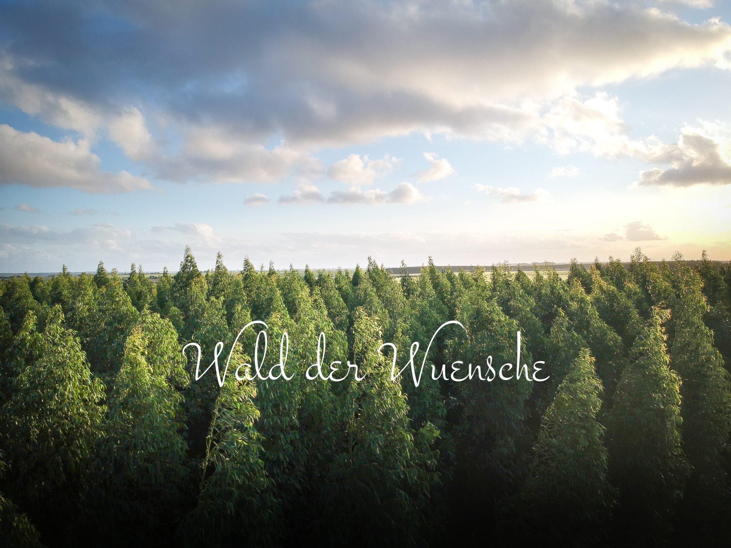 Wald der Wünsche